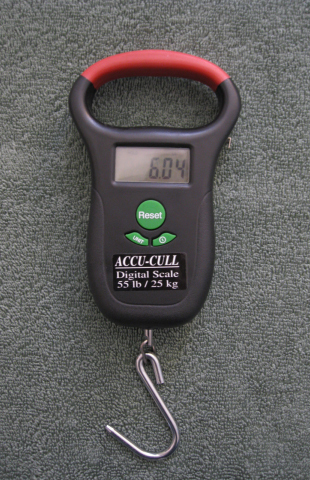 The ACCU-CULL Digital Scale